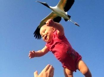 Аист принес ребенка
