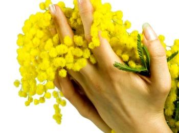 Мимоза в женских руках